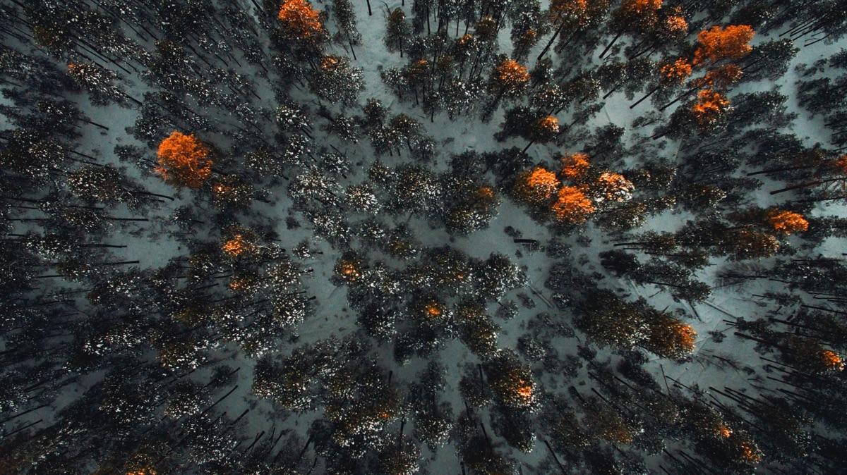 4 drone Mogollon Trees